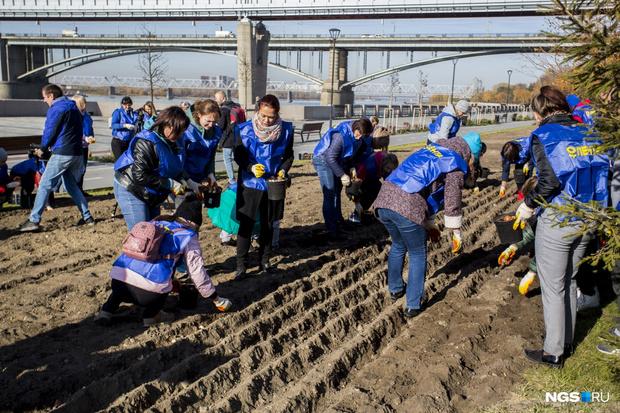 Фото №2 - На набережной Новосибирска высадили 30 тыс. тюльпанов