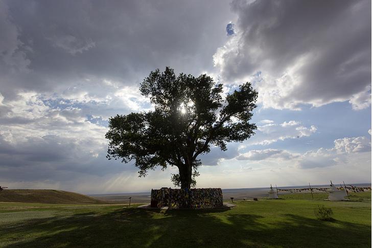 Фото №13 - Деревянные выборы: самые интересные деревья мира