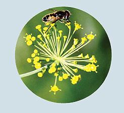 Фото №14 - Взятки сладки: 15 необычных видов меда