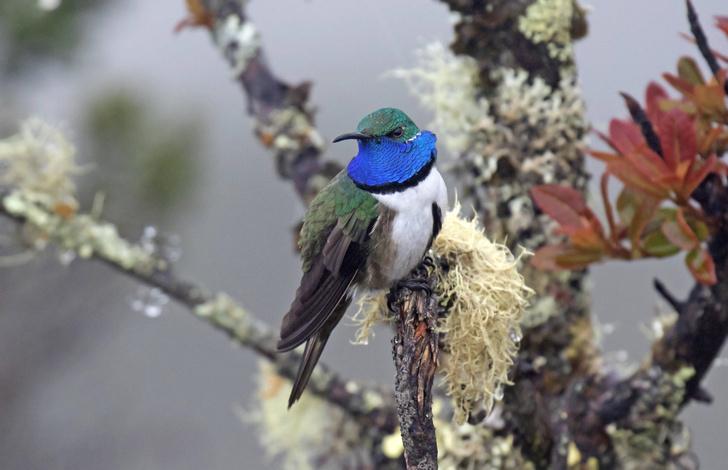 Фото №1 - Песни эквадорского колибри не слышны другим птицам