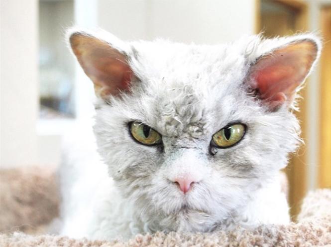 Фото №1 - Пушистый кот стал новым героем Instagram