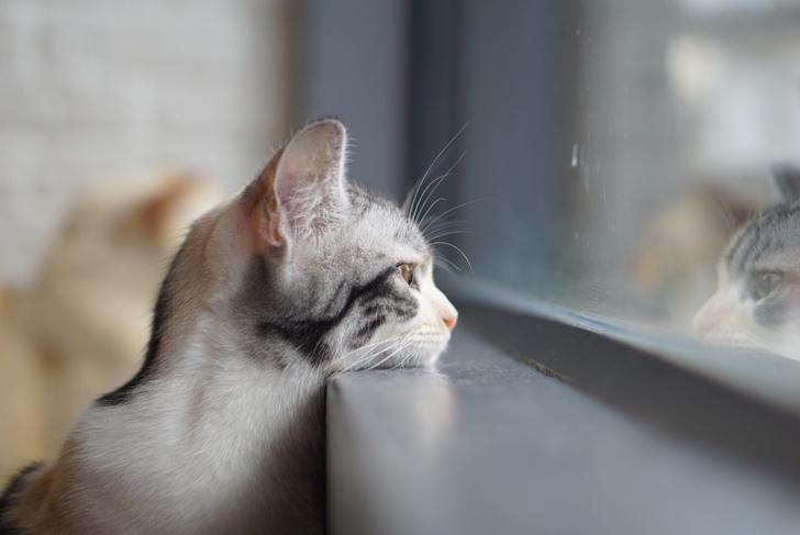 Фото №1 - Как долго кот помнит старого хозяина?