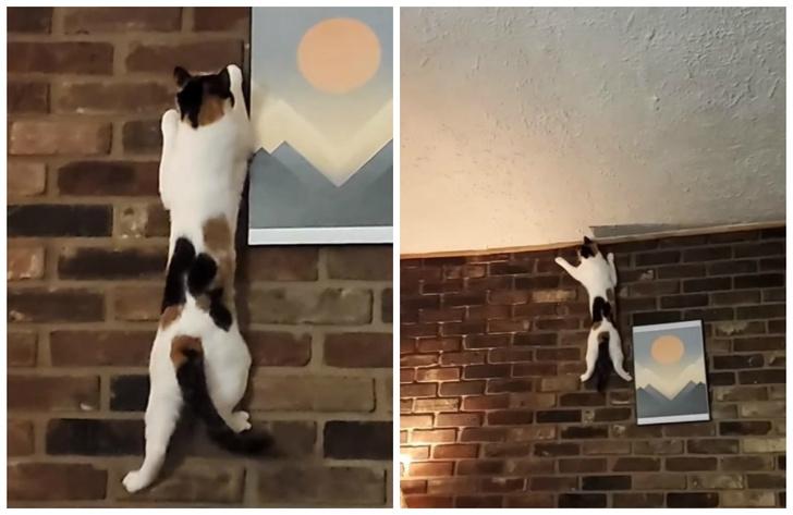 Фото №1 - Кошка наловчилась карабкаться по отвесной стене (видео)