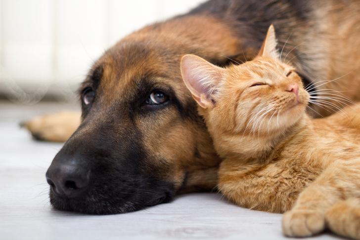 Фото №1 - Биологи: Причиной вымирания древних собак стали кошки