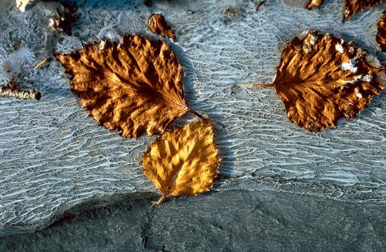 Фото №7 - Горячее сердце Камчатки