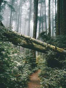 Фото №3 - Тест: Выбери дерево, и мы скажем, во сколько лет ты станешь успешной
