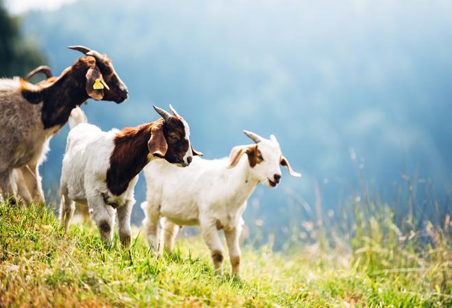 Фото №5 - 28 фактов о животных, которые поднимут настроение