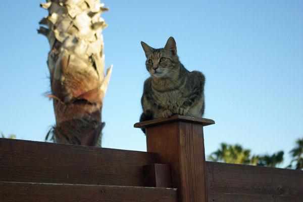 Фото №4 - Львиные сердца котов св.  Николая