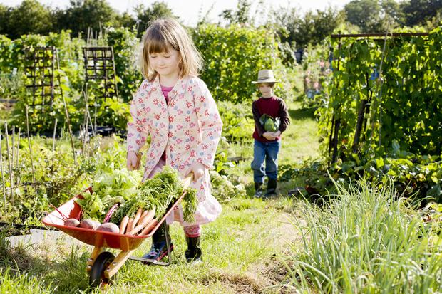 Фото №1 - Долгожители: 10 овощей, которые можно хранить месяцами