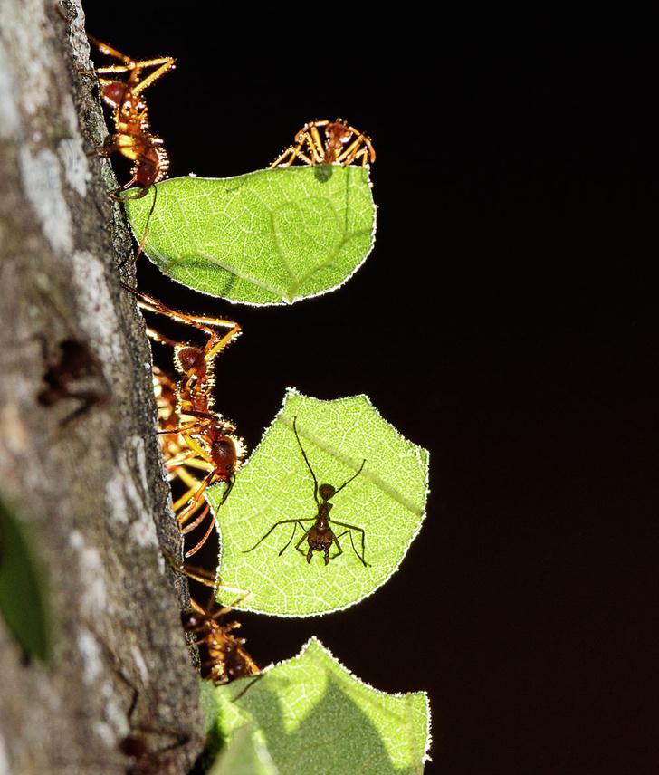 Фото №7 - Законы муравейника