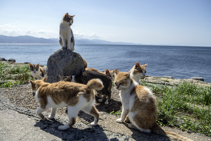 Фото №1 - Если люди исчезнут, смогут ли выжить кошки и собаки?
