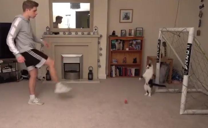 Фото №1 - Видео с котом-вратарем, не пропускающим ни одного мяча, набрало 11 миллионов просмотров