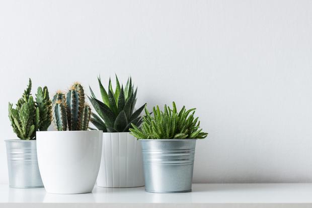 Фото №2 - 10 растений, которые выгоняют из дома плохую энергию