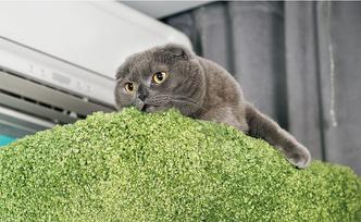 Фото №2 - «Где шесть, там и семь»: кошкин дом Наталии Гулькиной