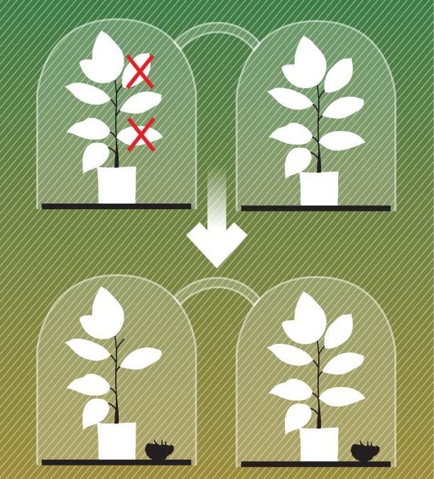 Фото №8 - Здравствуй, дерево! Тайная жизнь растений
