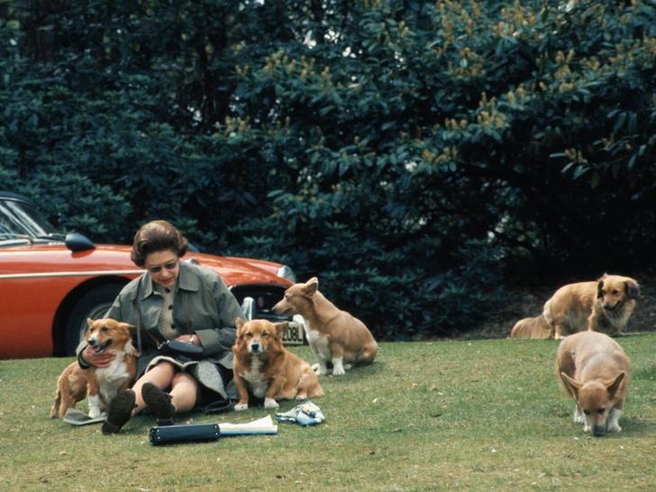Фото №3 - Конец эпохи: как изменится жизнь Королевы и британская монархия после смерти принца Филиппа