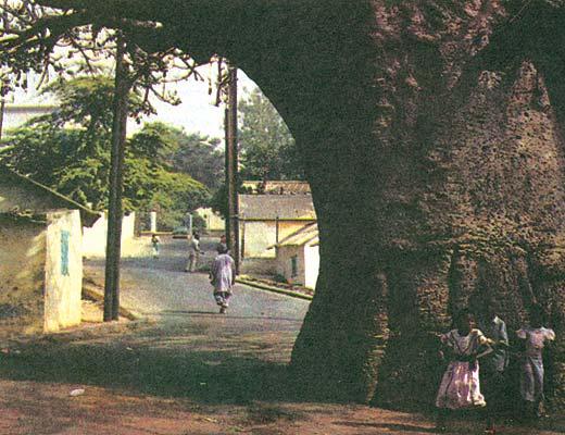 Фото №1 - Сенегал без баобабов