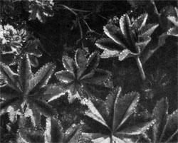 Фото №2 - Оршинский мох