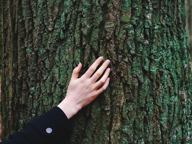 Фото №4 - Кто такие друиды и какое вы дерево