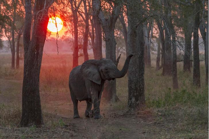Фото №1 - Один кадр: Мозамбик