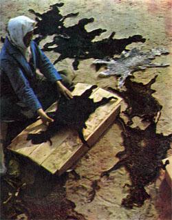 Фото №2 - Золото черных песков
