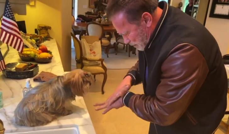 Фото №1 - Шварценеггер учит собаку мыть руки, чтобы не заразиться коронавирусом (видео)