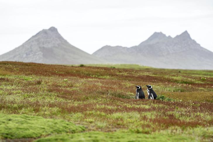 Фото №5 - Повелители Антарктики и не только: 7 мест на планете, где можно встретить пингвинов