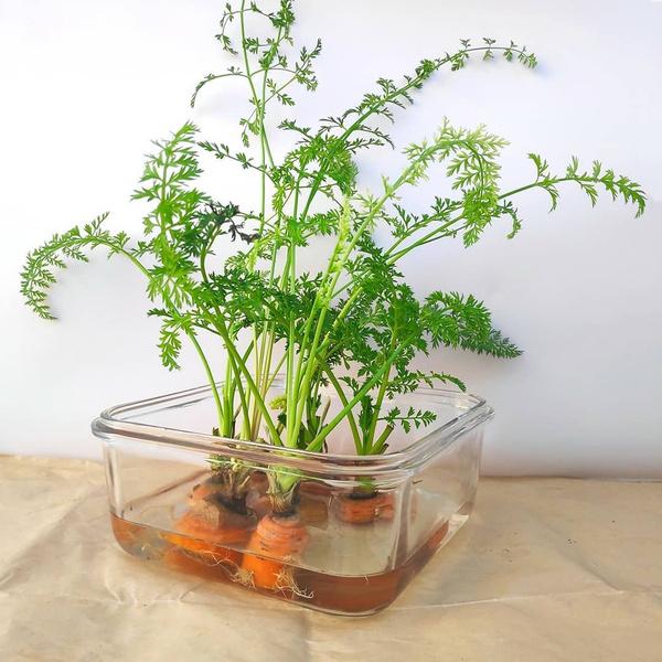 Фото №2 - 20 овощей и трав, которые легко вырастить на подоконнике