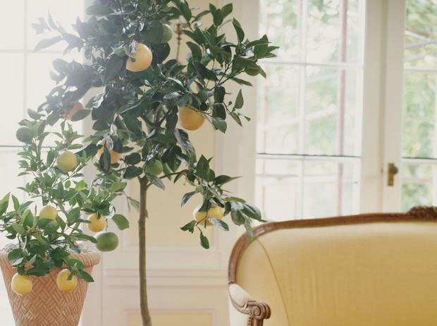 Фото №6 - Домашний доктор: 5 комнатных растений, которые защищают от вирусов