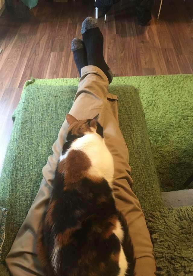 Фото №5 - Неожиданный лайфхак для владельцев слишком назойливых кошек
