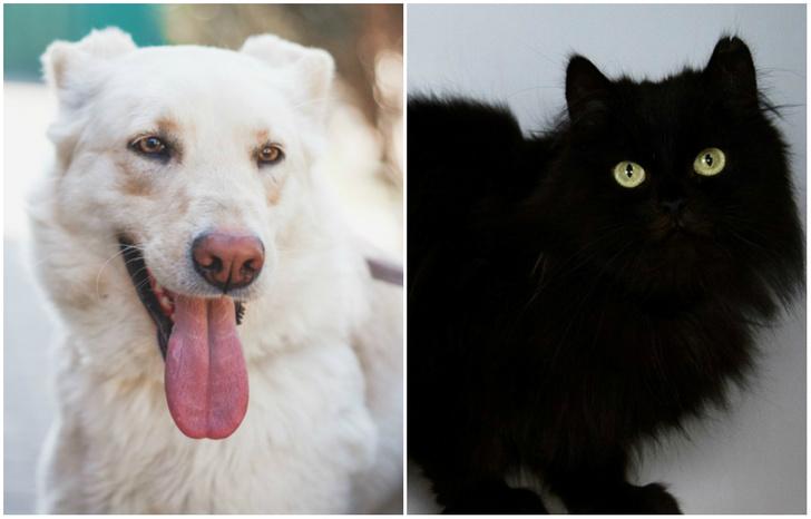 Фото №1 - Котопёс недели: кот Пушок и собака Ливадия