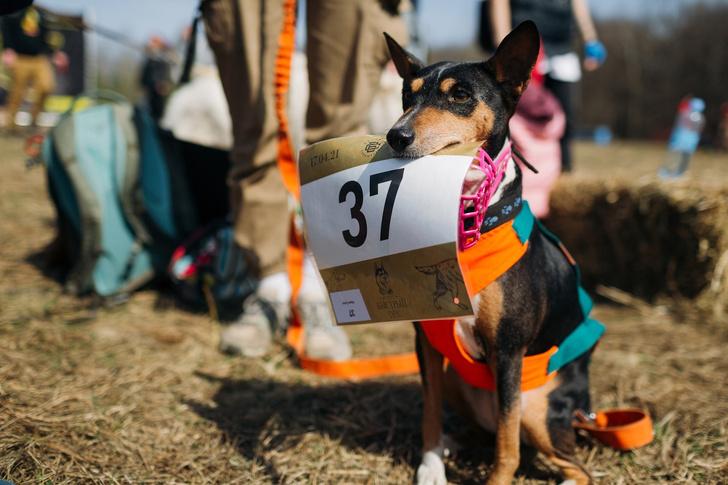 Фото №5 - Пушистый забег: собаки посоревнуются в скорости