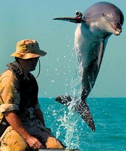 Фото №2 - Дельфиний спецназ