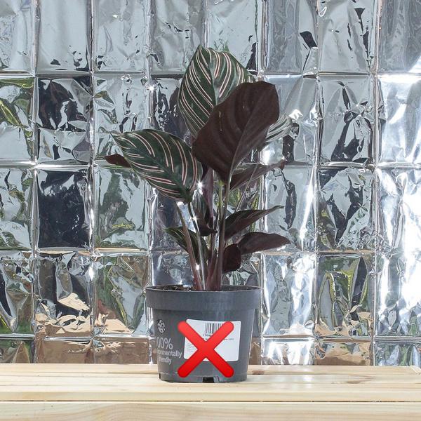Фото №2 - Все, что нужно знать о пересадке комнатных растений