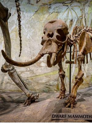 Фото №12 - 7 мифических монстров, которые могли существовать на самом деле