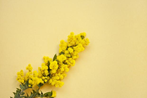 Фото №2 - Узнай, какой ты цветочек по дате рождения