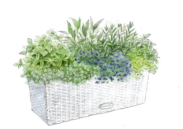 Фото №7 - Сад в миниатюре: советы начинающим садоводам