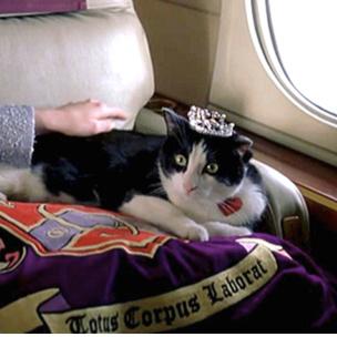 Фото №3 - Тест: Какая ты странная кошка из «Кошек»?
