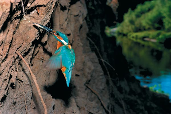 Фото №1 - Сверкающий рыболов