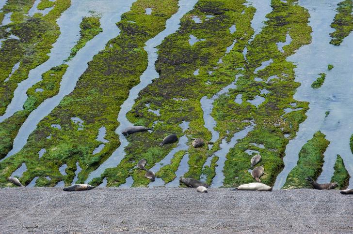 Фото №8 - Звериное царство: полуостров Вальдес