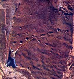 Фото №4 - Динозавров погубили... космические странники