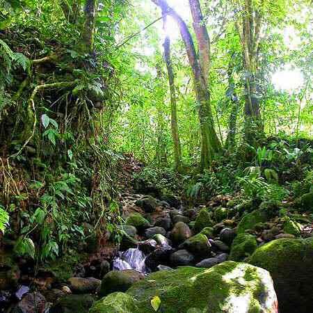 Фото №1 - Спасти джунгли