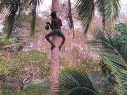 Фото №3 - Андаманский визит