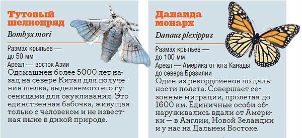 Фото №5 - Жизнь с размахом: энциклопедия бабочек