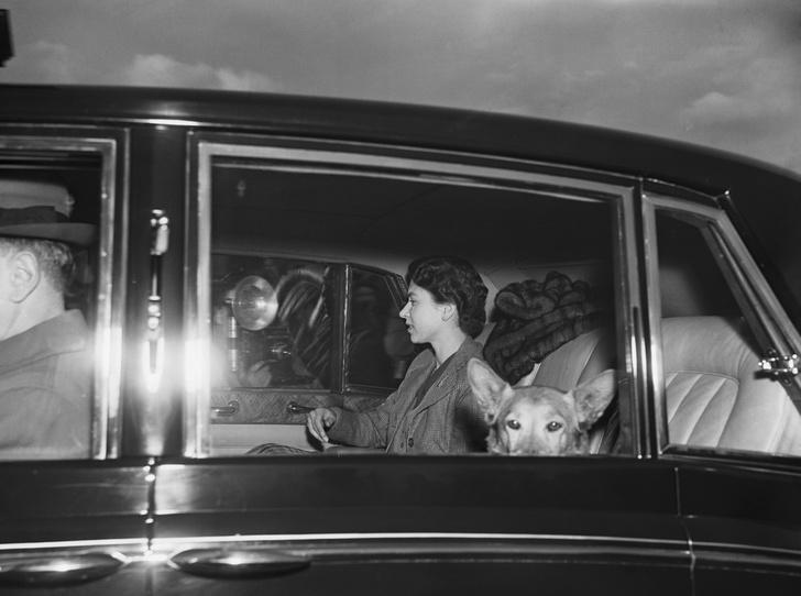 Фото №26 - Елизавета II и ее корги: история главной королевской страсти