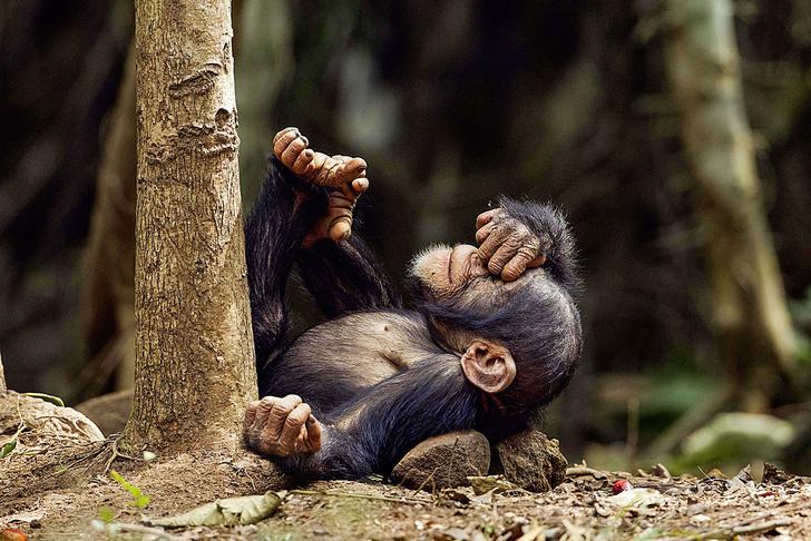 Фото №1 - Слово главного редактора: о юморе в жизни людей и животных