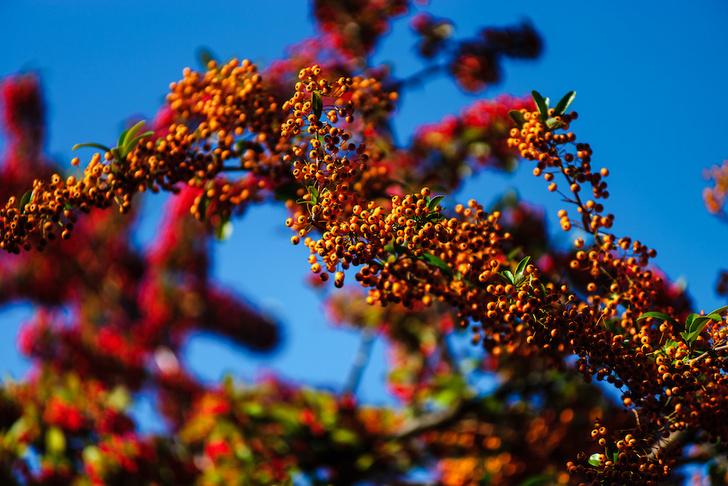 Фото №11 - Лесные и болотные самоцветы: северные ягоды во всей красе