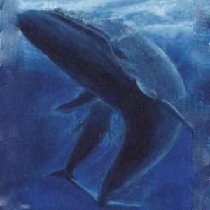 Фото №1 - Японских китов отстреливают под видом жертв науки