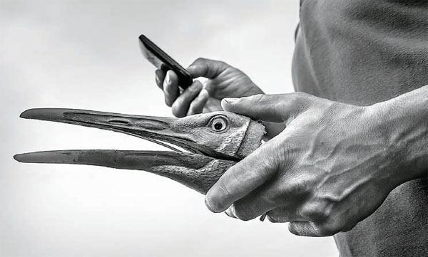 Фото №2 - Злые птички