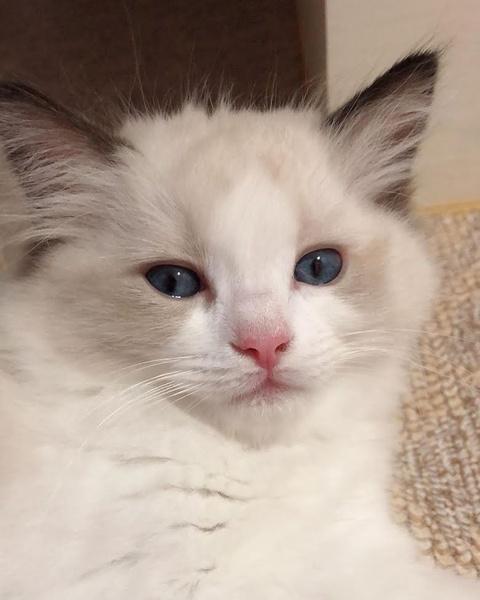 Фото №3 - Cat lover: у Лисы из BLACKPINK появился пятый котик 😺